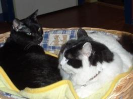 有料のネコ部屋写真②