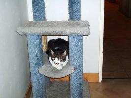有料のネコ部屋写真①